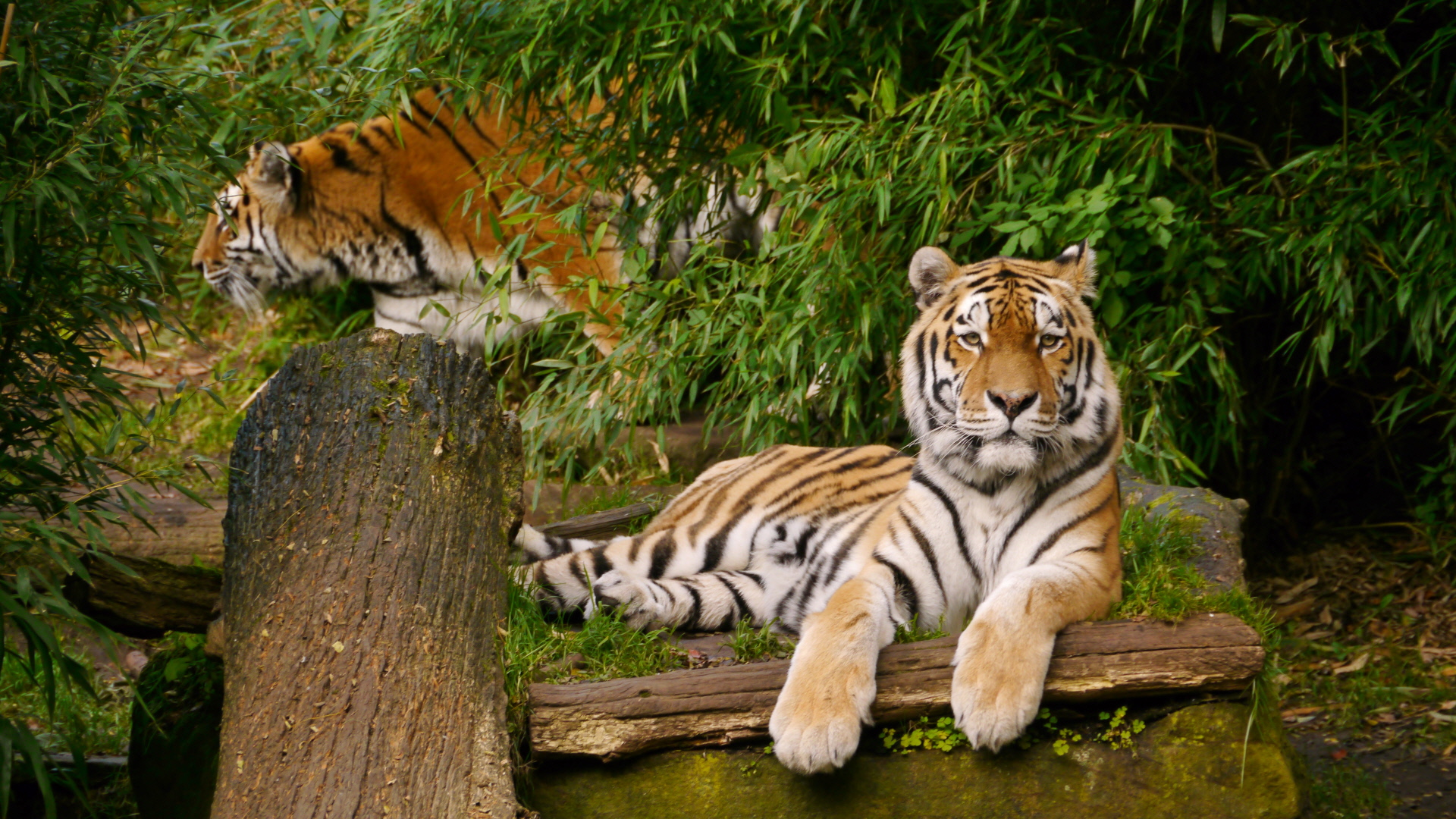 animals_20151113_1427054462